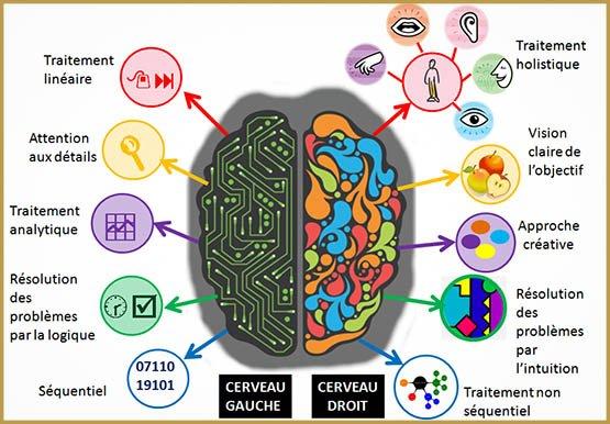 a quoi ça sert le cerveau droit et le cerveau gauche
