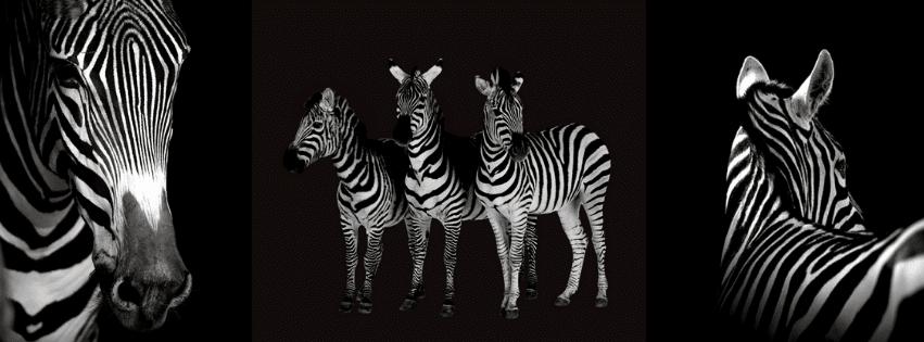pourquoi zebre pour surdoué