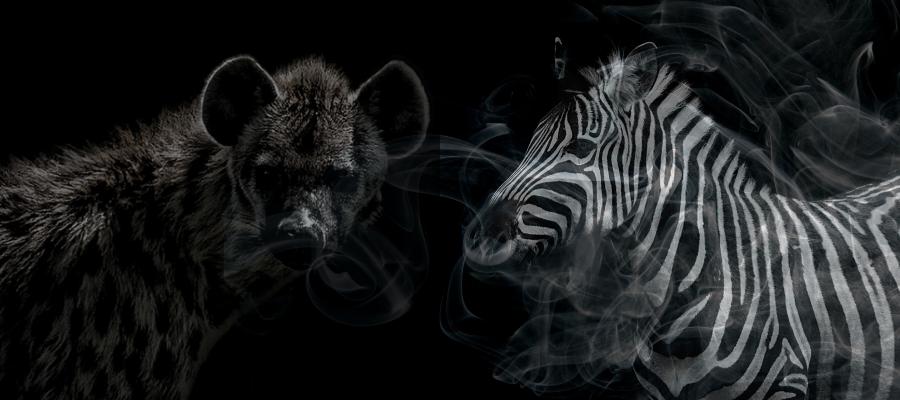 un zebre peut il etre pervers narcissique