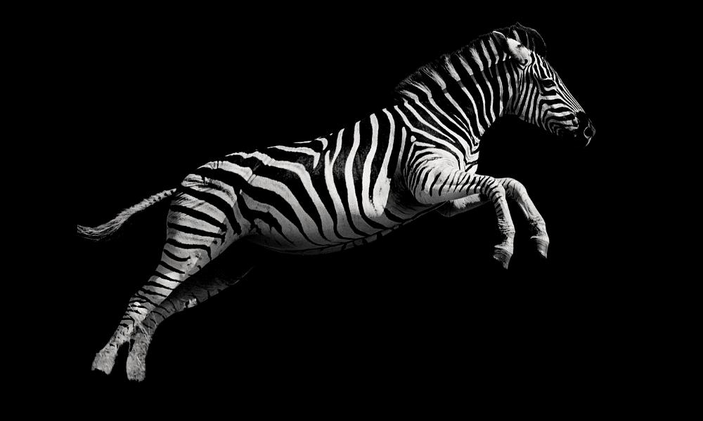 Zebre ou hypersensible